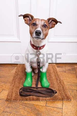 24327223-dog-with-green-rubber-rain-boots-waiting-to-go-walkies-in-the-rain-and-cold-weather