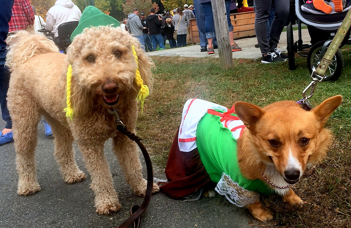 Oktoberfest fun – sharing a costume works too if you have 2 dogs 🙂 c295e676e830