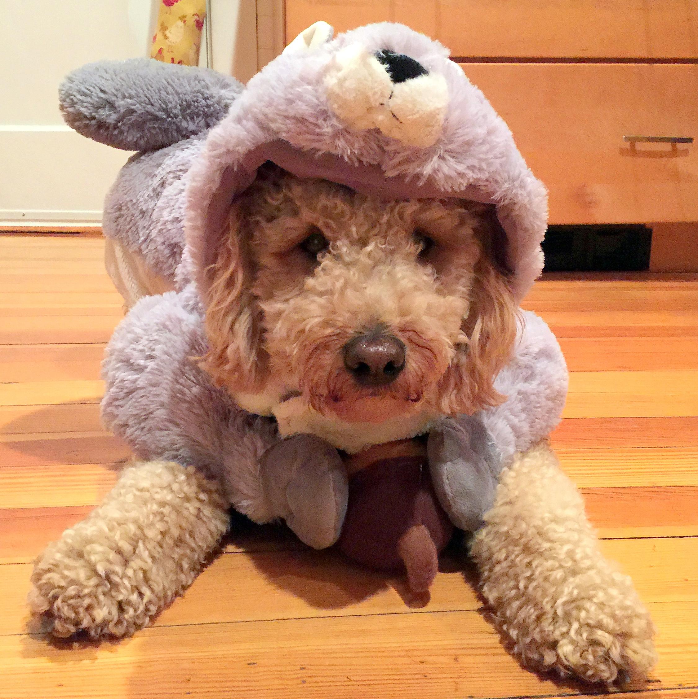 dog halloween costume ideas – you bet your pierogi